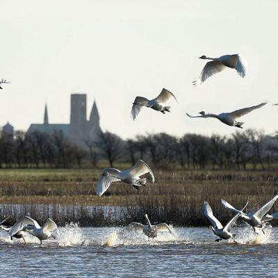 Ribe Cathedral with birds in the foreground | By the Wadden Sea
