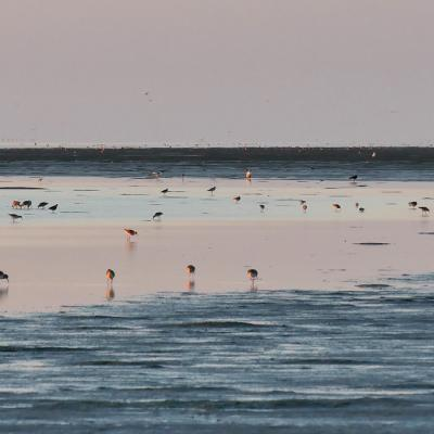 Birds in the Wadden Sea | By the Wadden Sea